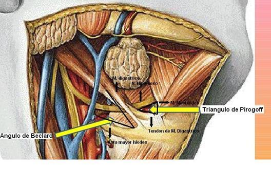 Tutorial Anatomía Cabeza y Cuello: Región Suprahioidea.