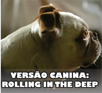 Versão canina da música da Adele