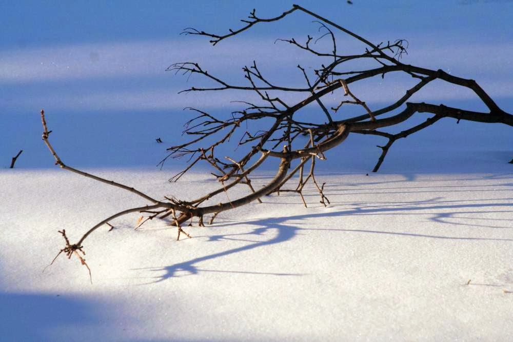 Focus on Life ~ Silhouette: Frozen a crisp winter day :: All Pretty Things