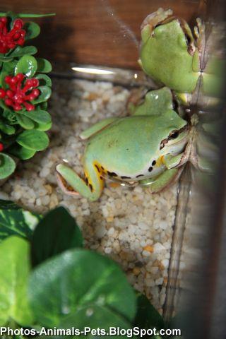 http://4.bp.blogspot.com/-kuDJ9DcYvnA/TaBL228eIzI/AAAAAAAAAmk/Rag7KhwHNro/s1600/green%2Bfrog_0002.jpg