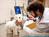 Dokter Hewan