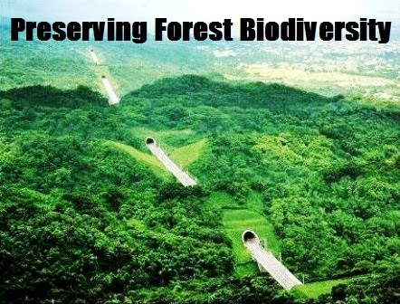 preservation of biodiversity essays This essay what is biodiversity and other 64,000+ term papers, college essay examples and free essays are  convention for the preservation for the.