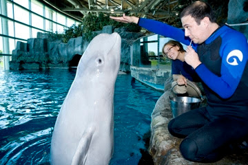 Shedd aquarium trainer for a day cost