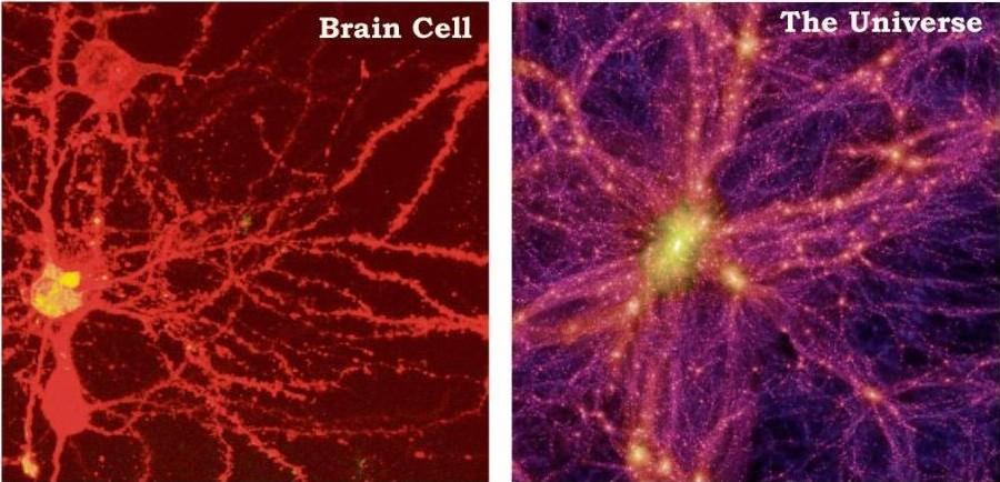 http://4.bp.blogspot.com/-kuu2GgCxF10/TVN_F5-8H-I/AAAAAAAAAMU/sjx6D2-O9No/s1600/brain-cell-universe-1.jpg