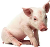 pork photo, pig image ,trichinosis, pig pictures, pig breeds, pig farming, pig facts, swine picture, pork flesh, pig meat,
