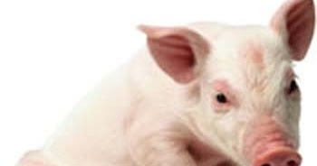 why is pig haram in islam This text analyses the impermissiblity of consumption of pork in islam through a series of thirty six questions posed from a christian pig is absolutely unclean and i often wonder why muslim brethren have not been allowed to enjoy this tasty food, as we christians do.