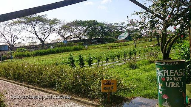Zenxin Organic Farm