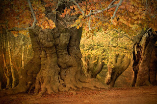 Old forest in autumn