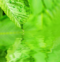 Green leave on the water