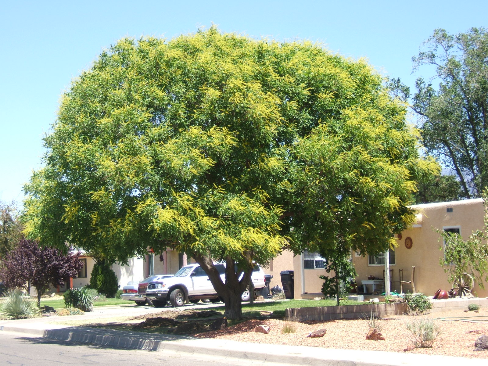 Trees That Please Nursery: Shade Trees for Small Spaces