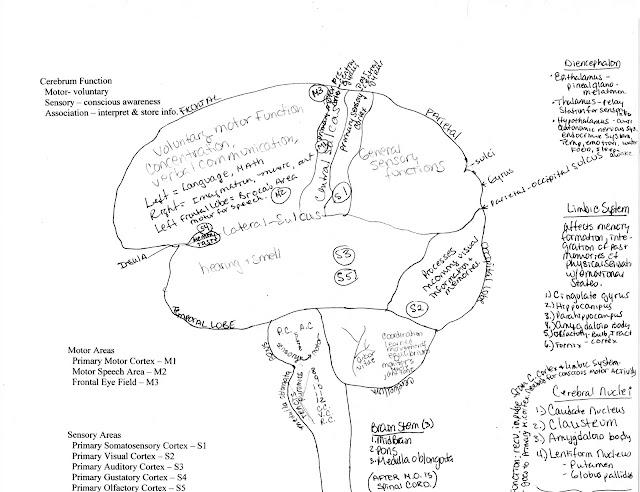 Brain Functions6