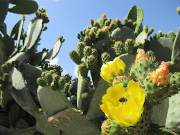 Prickly Pear Cactus, Chania, Crete, Spring 2015