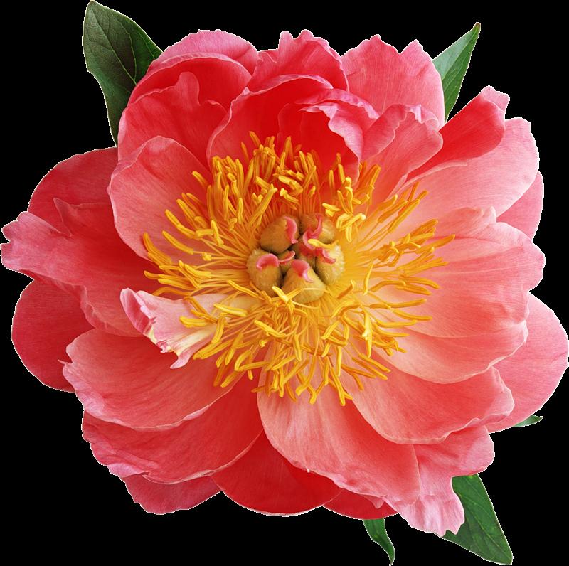 Lugar Fofo Mais Flores Png