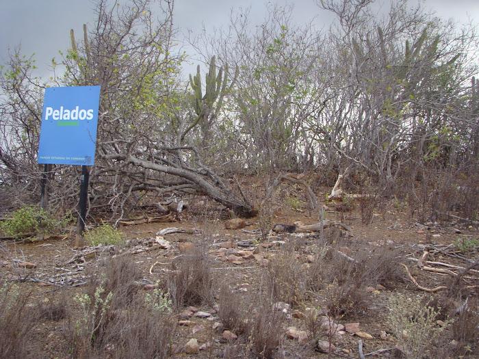 Monte Pelados