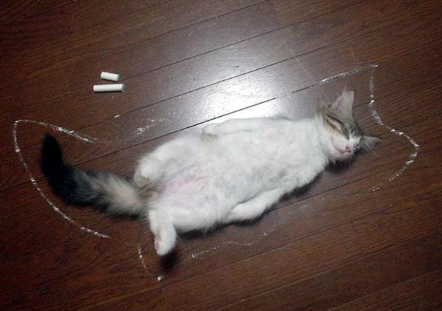 funny cats pictures, crime scene cat