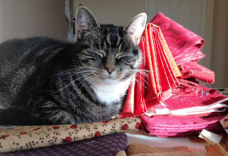 Cat choosing fabric for Easy Street Mystery Quilt