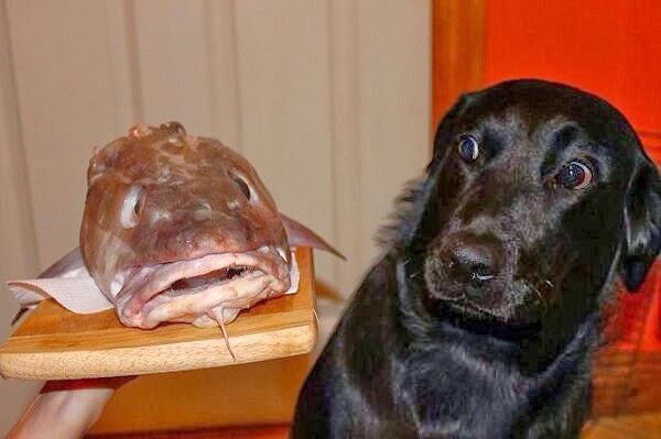 Cute dogs - part 7 (50 pics), dog and fish