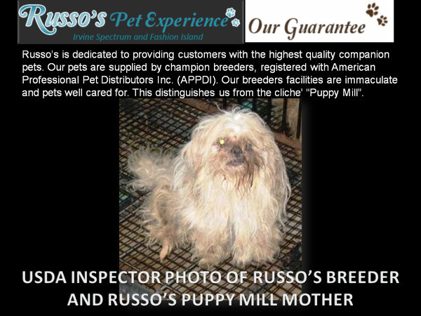 Russos Pets, Russos Pet Experience, Russos Newport Beach, Visitnewportbeach.com
