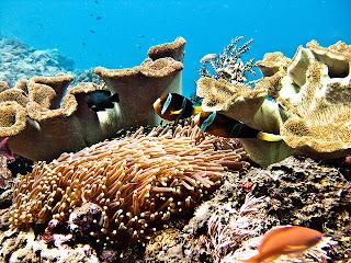 snorkelling sites in bali, snorkelling in bali