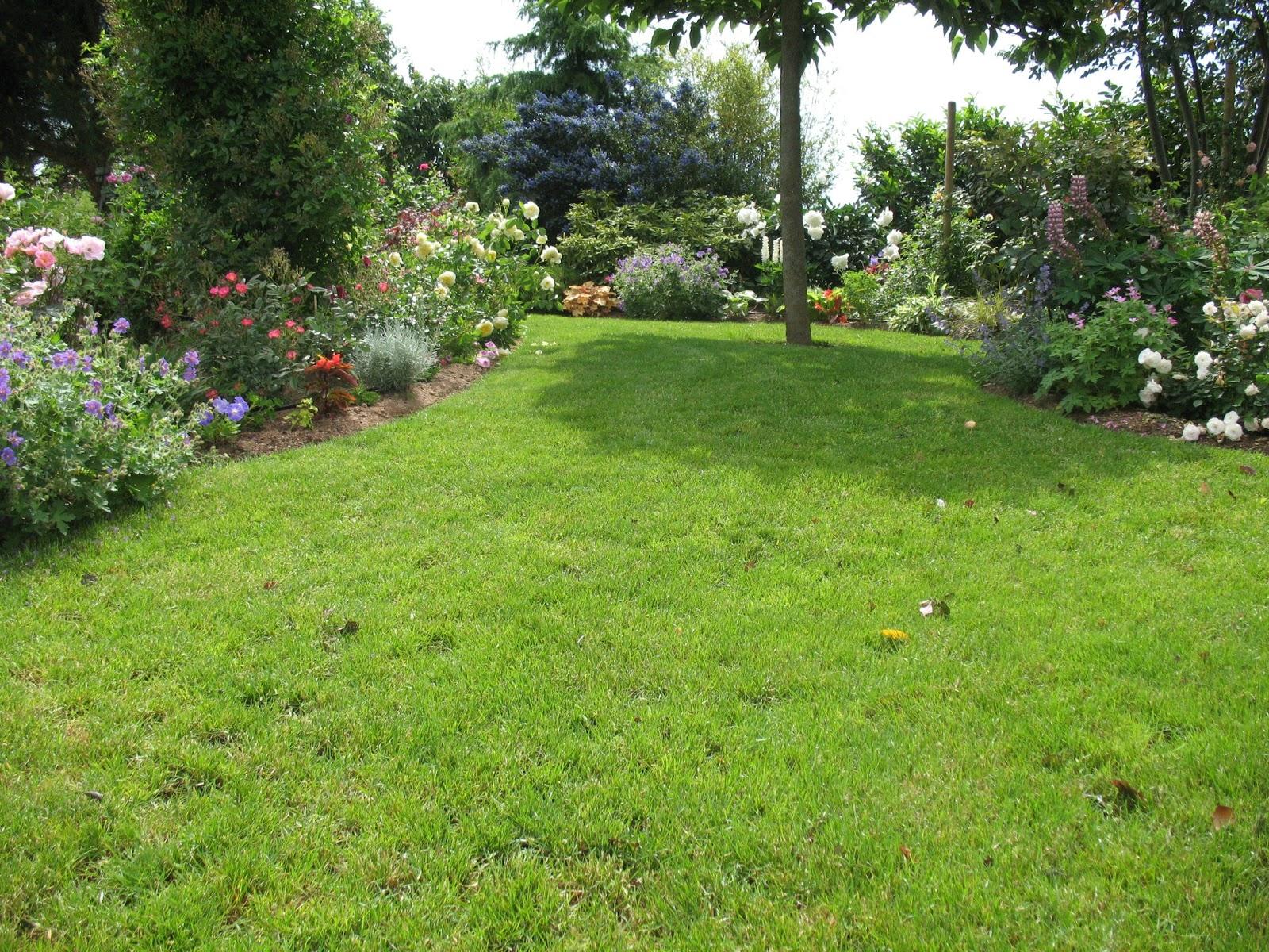 roses du jardin ch neland arbustes floraison estivale. Black Bedroom Furniture Sets. Home Design Ideas
