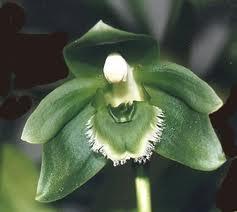 Cultivo de las orquídeas