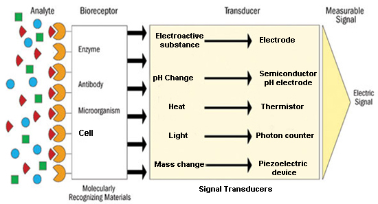 General scheme for biosensors