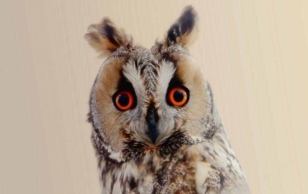 14. Photograph Owl eyes by Murat Çalışkan