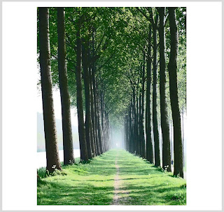 avenue of trees print, damme print, belgian photo prints, laura hol art
