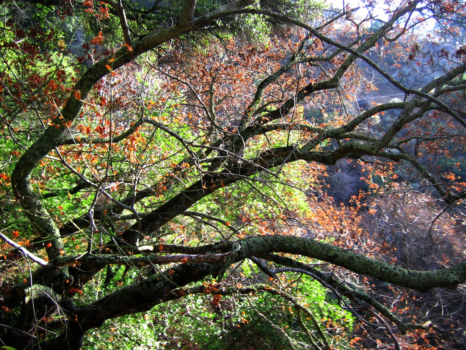 Branches, Roberts Regional Park by Rachel Medanic