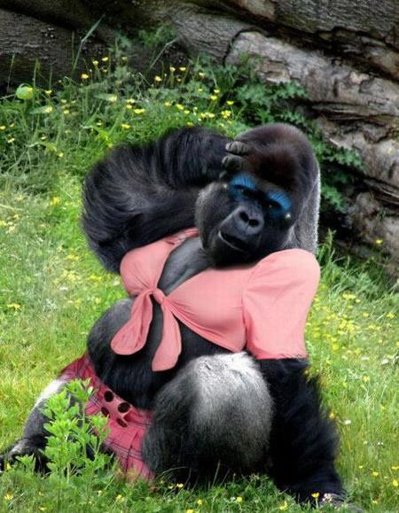 Gorille Vecteurs et Photos gratuites - frfreepikcom