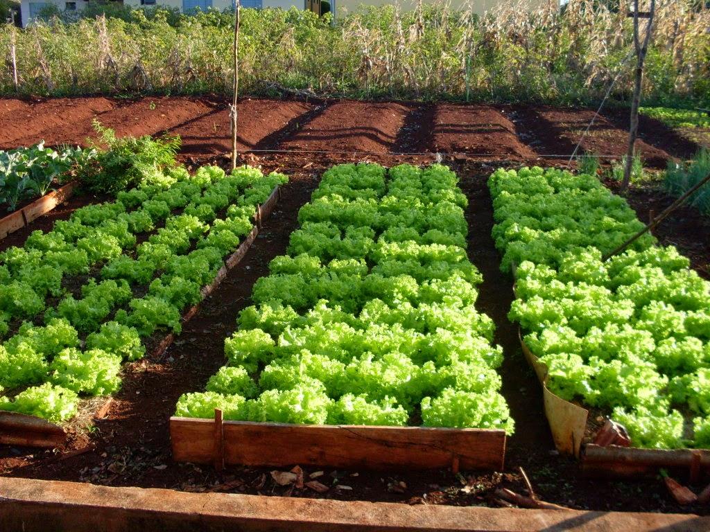 Excepcional Amélia Moderna: Como criar uma horta em casa CT83