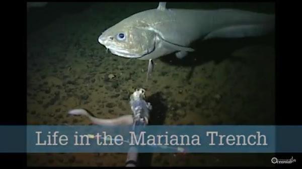 Palung Mariana