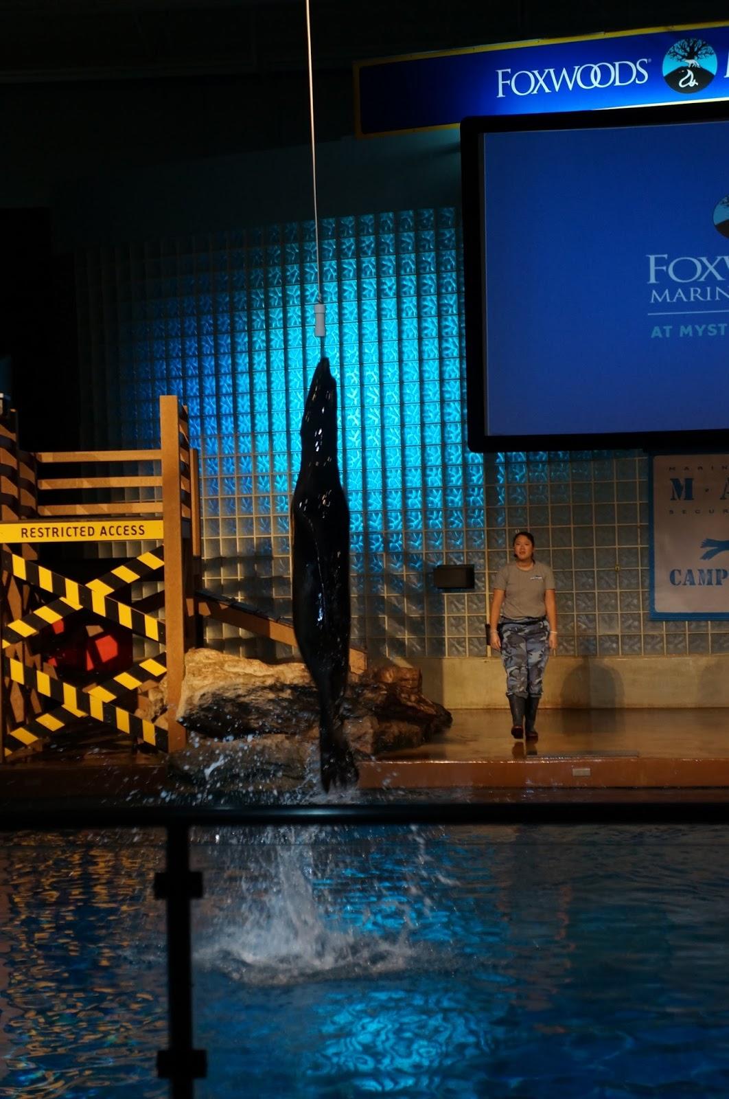 Evan And Lauren 39 S Cool Blog 8 15 16 Mystic Aquarium So