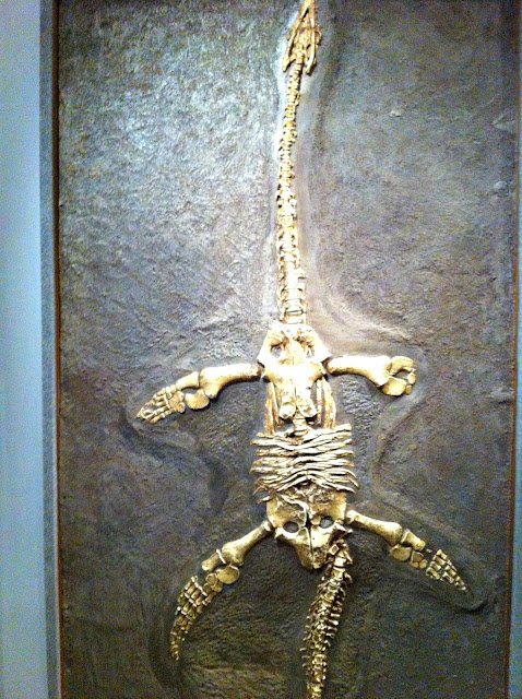 Fossilised plesiosaur wall hanging, Bristol City Museum