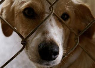 500.000 αδέσποτα και εγκαταλειμμένα ζώα στην «Μαύρη αγορά» της Ευρώπης