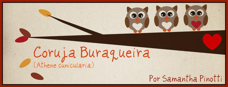 Coruja Buraqueira