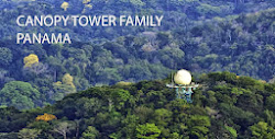 CANOPY TOWER FAMILY