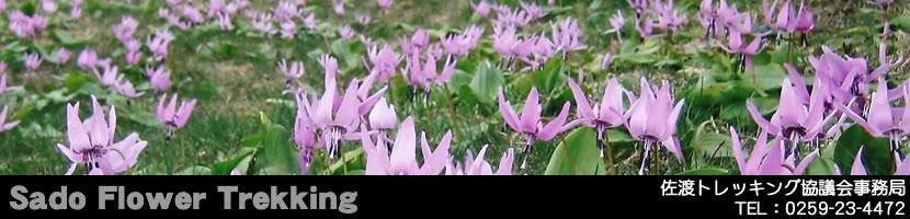 佐渡島の花トレッキングブログ