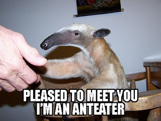 pleased to meet you im an anteater