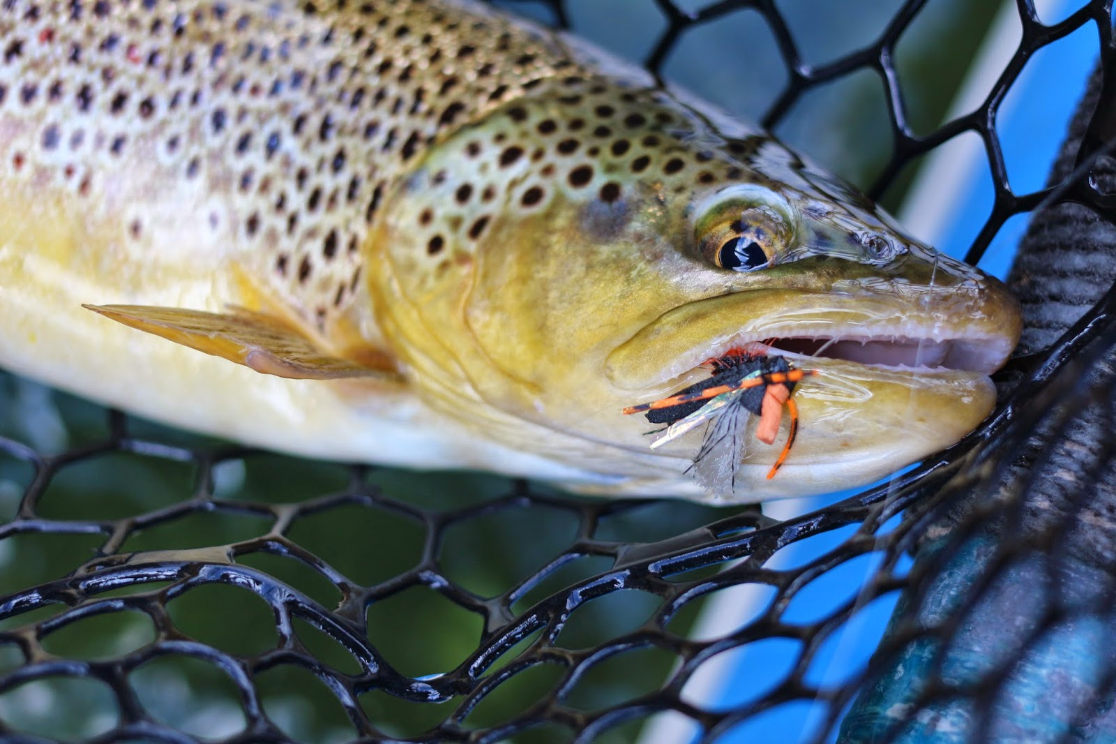 Jay scott outdoors green river cicada hatch flyfishing 6 for Hatch fly fishing