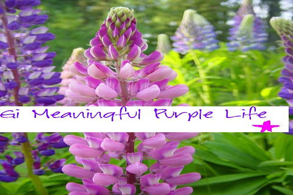 Gi meaningful purple life