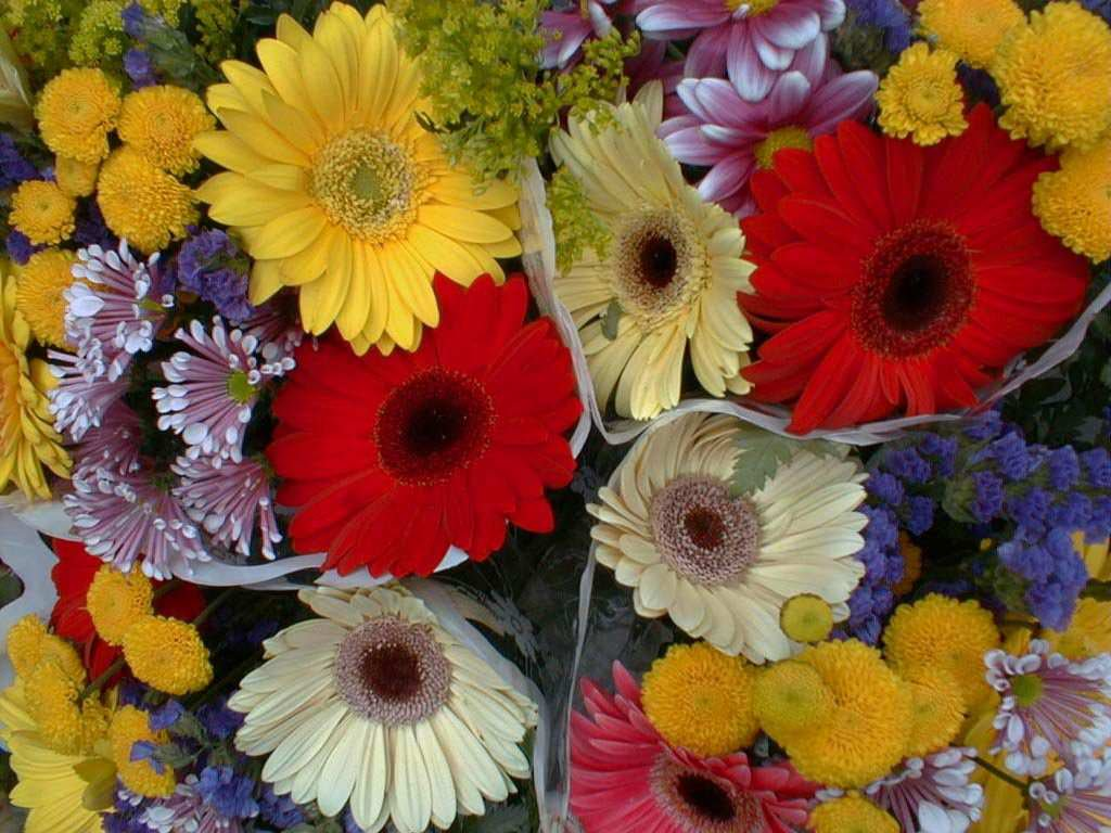 Beautiful Colourful Flowers Wallpapers Beautiful Colourful Flower