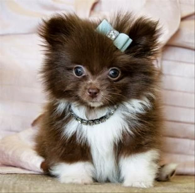Cute Pretty Puppy