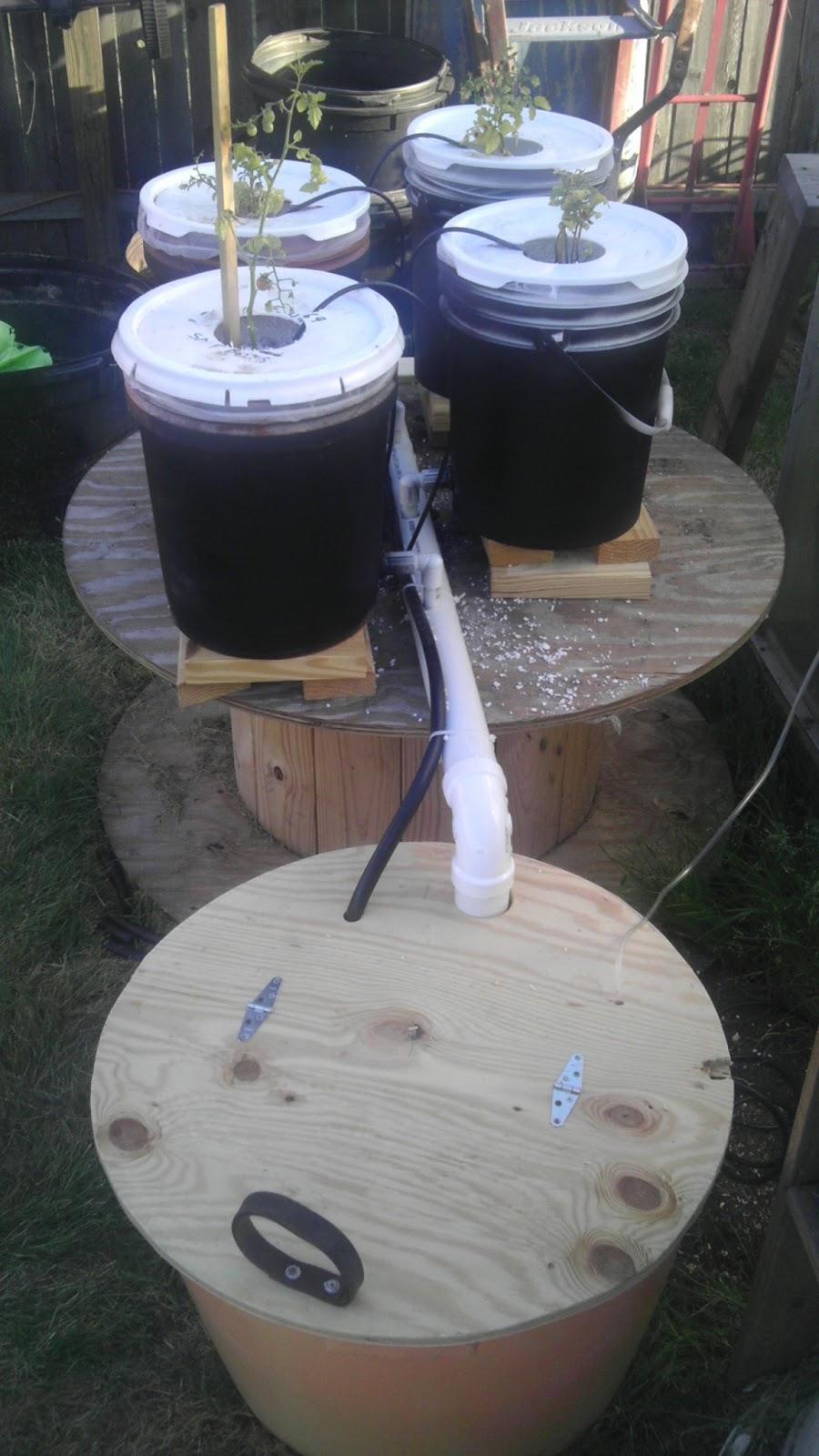 Modern Day Redneck Dutch Bucket Hydroponics System