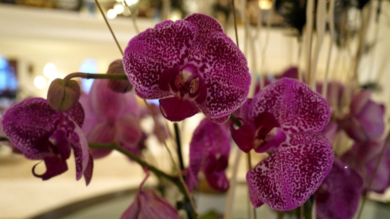 The Corinthia hotel budapest orchids