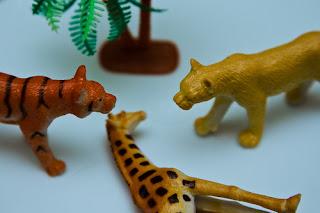 Tigers and a giraffe