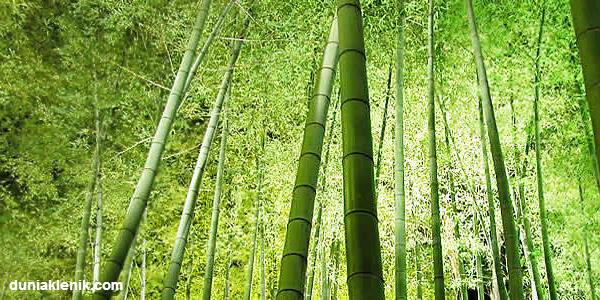 7 Pohon yang dipercaya Jadi Sarang Hantu