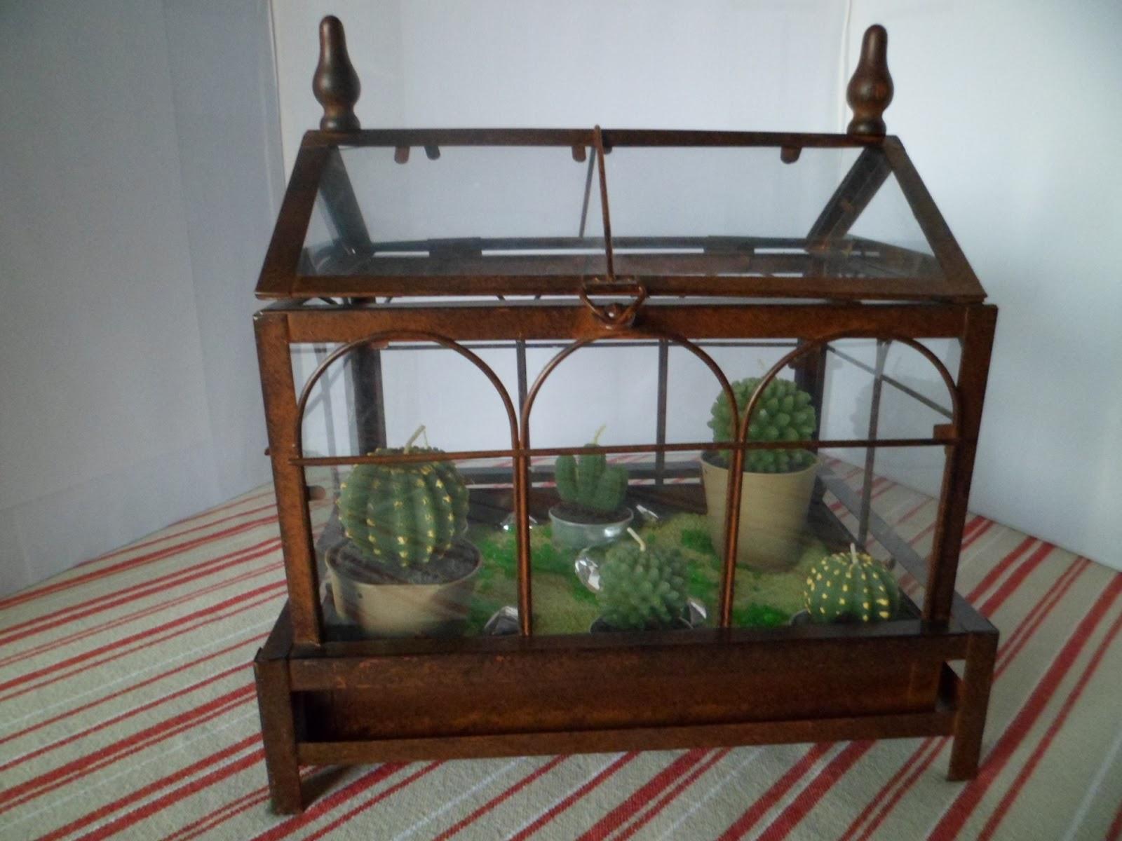 Ma vie d co serre cactus sans entretien - Mini serre d interieur ...