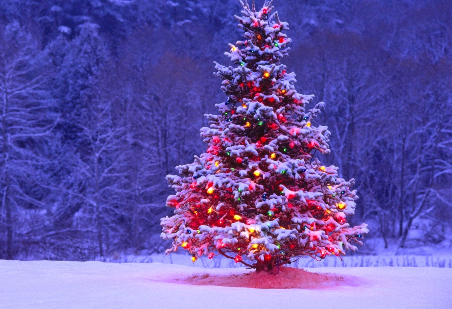 Christmas Tree Pictures, Wallpapers