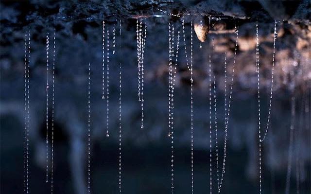 Luciérnagas cueva de Nueva Zelanda  cielo noche estrellada